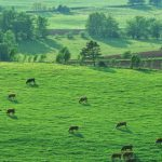 Thủ tục xin cấp giấy chứng nhận quyền sử dụng đất
